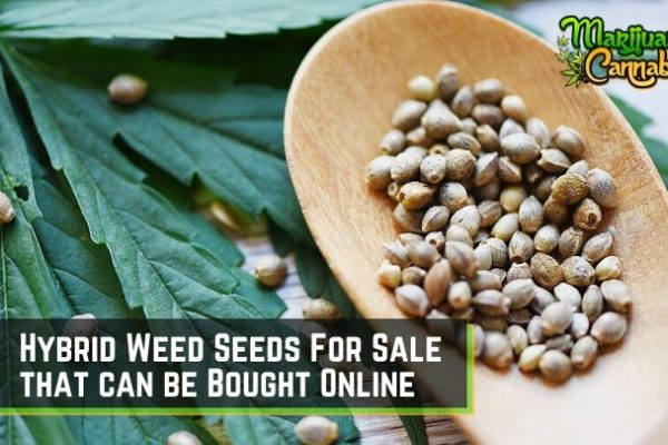 hybrid weed seeds for sale
