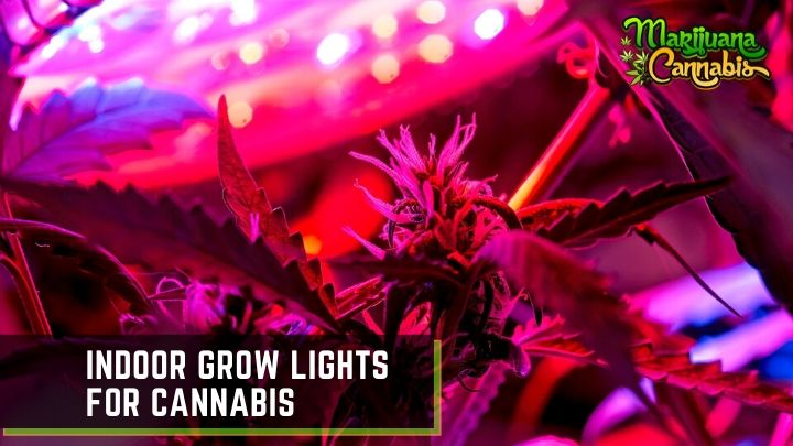 Indoor Grow Lights for Cannabis