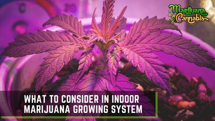 Indoor Marijuana Growing System
