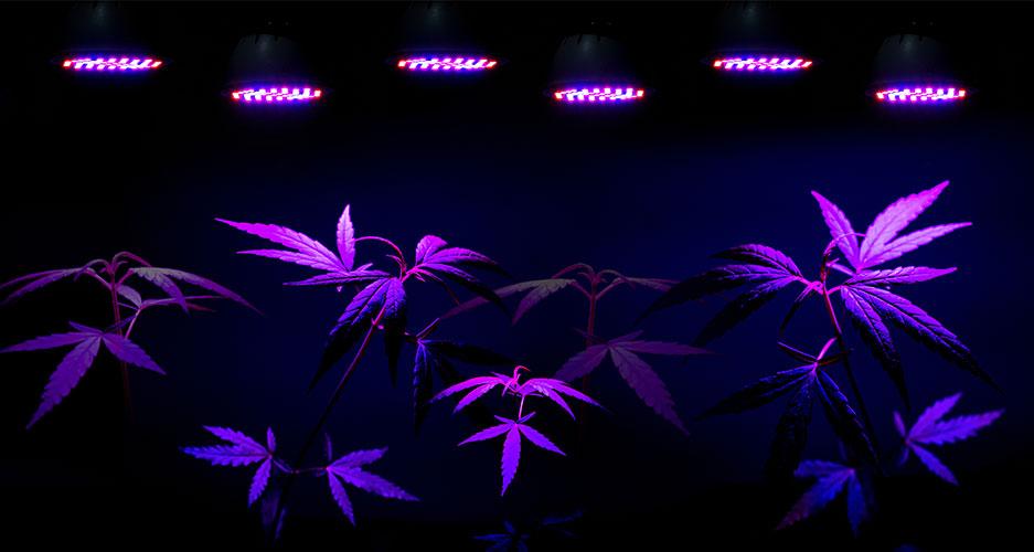 Marijuana grow lights