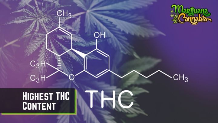 Highest THC Content