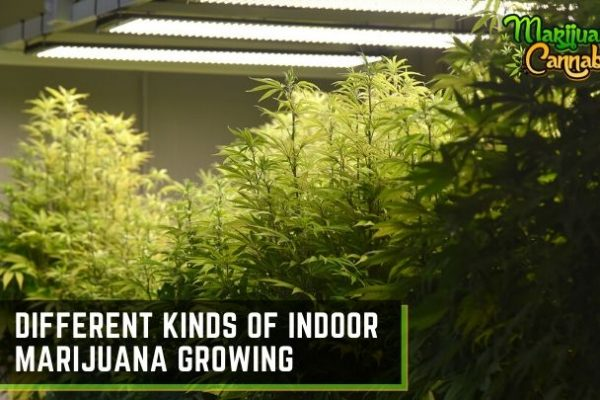 indoor marijuana growing methods