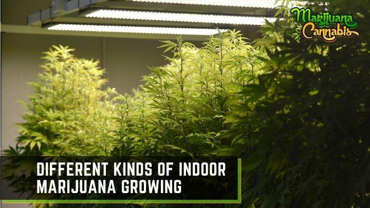 indoor marijuana growing methods