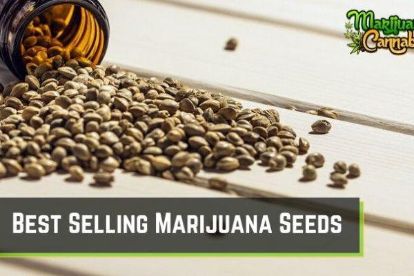Best Selling Marijuana Seeds