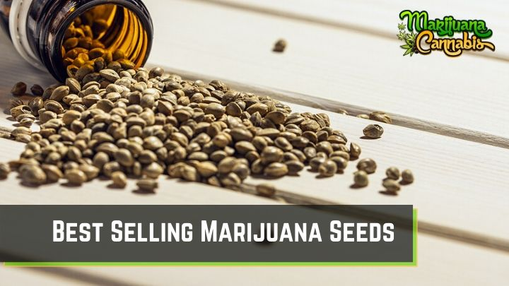 Best Selling Marijuana Seeds