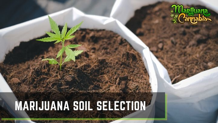 Marijuana-Soil-Selection