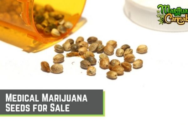 Medical Marijuana Seeds for Sale