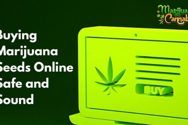 how to buy cannabis seeds online safely