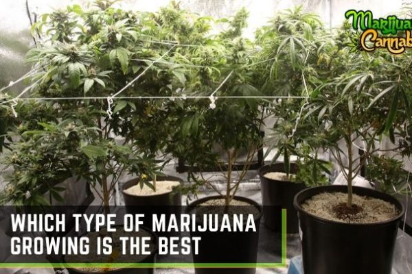 how to grow marijuana indoor and outdoor
