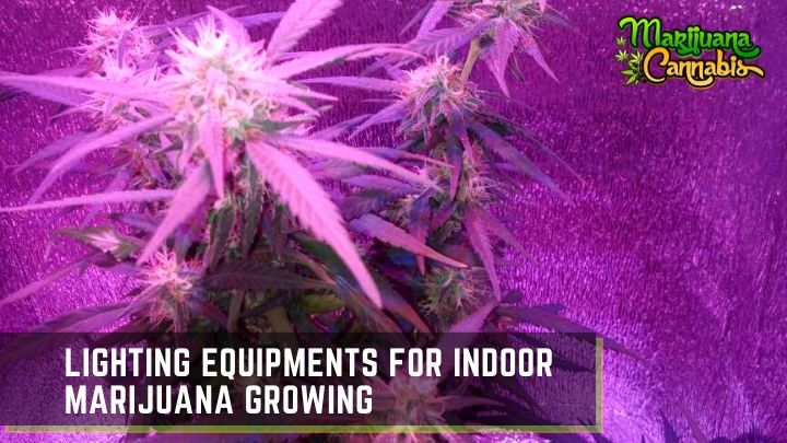 indoor marijuana grow lights