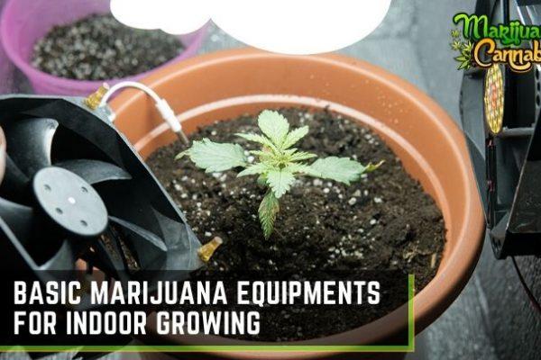 indoor marijuana growing equipment