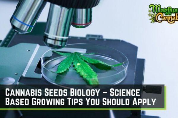 cannabis-biology