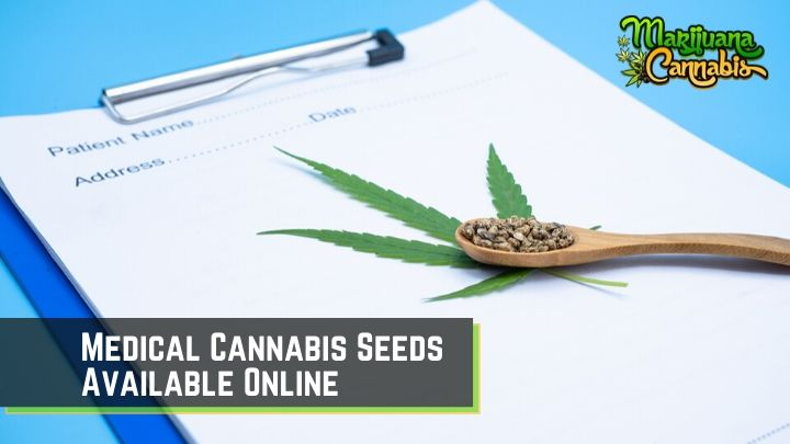 medical cannabis seeds online
