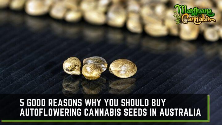 cannabis-seeds-australia